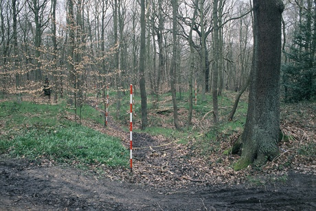 Photo of Boundary Ditch in Beeston Wood